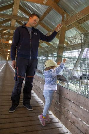 En man håller upp locket till en rävbur och ett barn tittar in i buren. Vi befinner oss på en rävfarm.