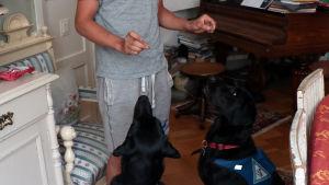 En ung man står och håller upp två hundgodisar. Under händerna sitter två svarta hundar och stirrar på godisbitarna.