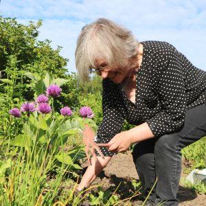 Anu Ranta gräver i trädgårdslandet på sin odlingslott.