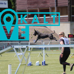 En hund springer över ett hinder på en agilitytävling.