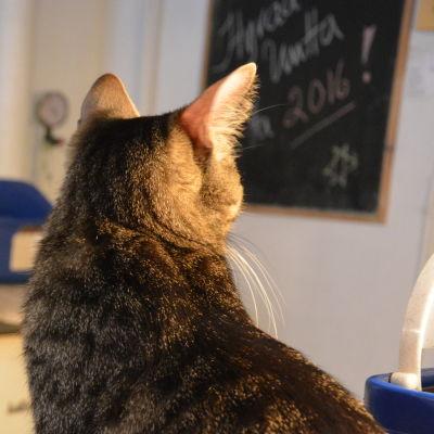 Katterna bor trångt i katthuset i Vasa. De allra flesta får dock ett nytt hem.