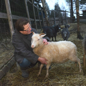 Rannvi Wallen med ett vitt lamm som är ett Ålandsfår. Bredvid ett vuxet Ålandsfår.