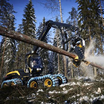 Ponssen harvesteri kaataa metsää