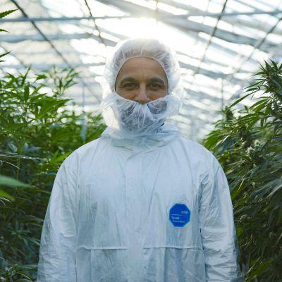 Mies valkoisessa suojapuvussa kannabisviljelmän keskellä