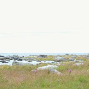 Grynna och stenar i österbottnisk skärgård. Fotot taget på Valsörarna.