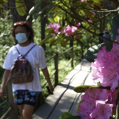 Kvinna med munskydd i rhododendronpark.