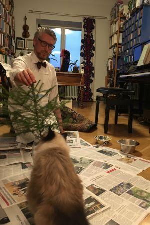 Kissa tutkii joulukuusta
