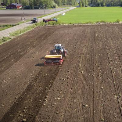 Ilmasta käsin kuvattu kuva, jossa traktori vetää kylvökonetta pellolla.