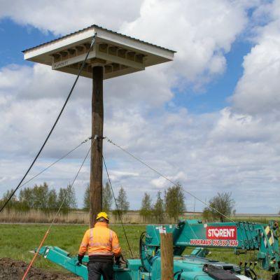 Liminganlahden luontokeskuksen alueelle rakennettu räystäspääskyjen pesimätorni.