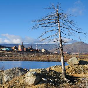 Ett ensamt dött träd framför ett vattendrag med industri i bakgrunden.