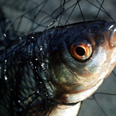 Kala verkossa.