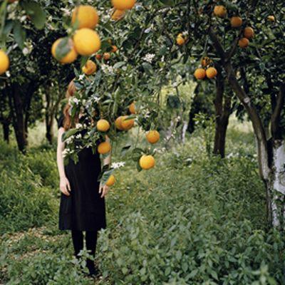 Osa Vuoden nuoren taiteilijan Anni Leppälän teoksesta Orange tree.