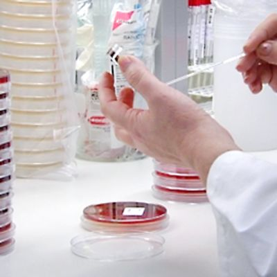 Viljelymaljoja laboratoriossa.