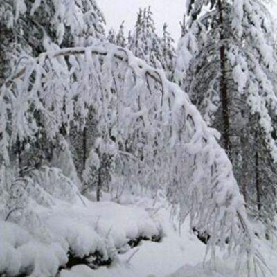 Lumipeitettä Puumalassa