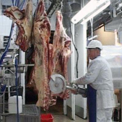 Snellmanin työntekijä leikkaamassa ruhoja teurastamossa.
