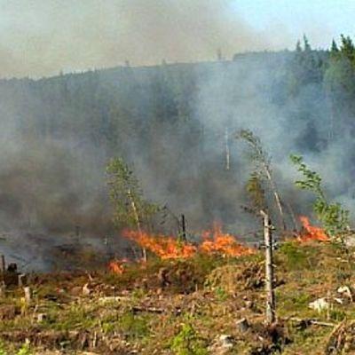 UPM kulotti metsää Konnevedellä.