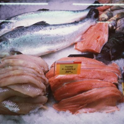 Kaloja kylmätiskissä.