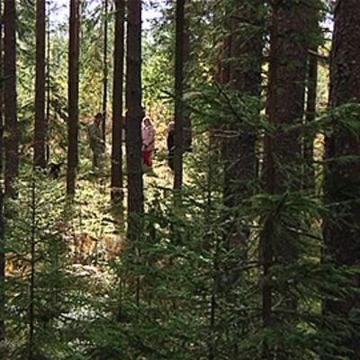 Metsäreissusta voi tarttua tuliaisiksi pihkaa vaatteisiin tai hiuksiin.