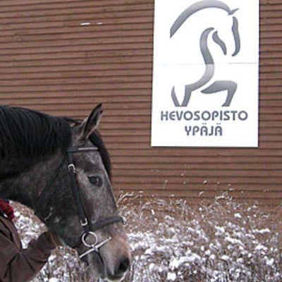 Hevonen ja taluttaja Hevosopistolla Ypäjällä
