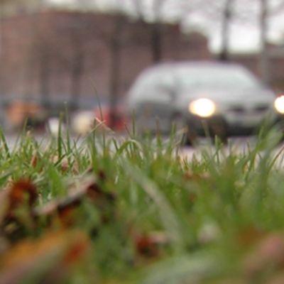 Epäterävä kuva syksyisestä nurmikosta. Takana liikenneväylällä menee henkilöauto.