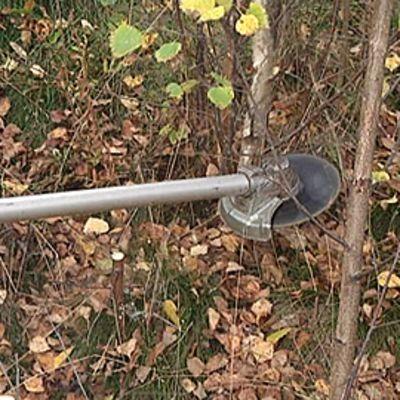 Raivaussahalla kaadetaan koivikkoa metsässä.
