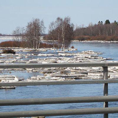 Kevättulvaa Kalajoella.