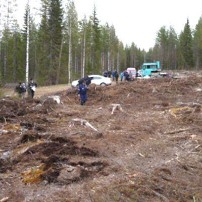 Metsäpalsta päätehakkuun jäljiltä Paltamossa.