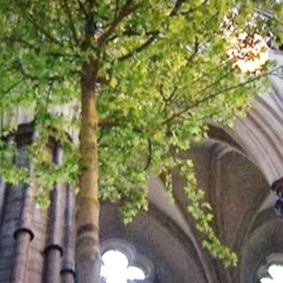 Westminster Abbeyta koristellaan puilla  Williamin ja Katen häitä varten.