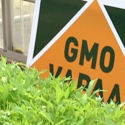 kyltti_GMO-vapaa