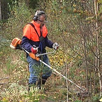 Taimikonhoitokurssilainen harjoittelee raivaussahan käyttöä metsässä.