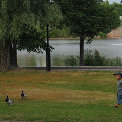 Hanhia ja ihmisiä Hesperian puistossa