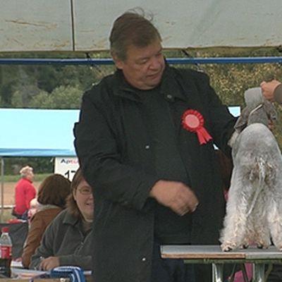 Koira koiranäyttelyn tuomarin arvioitavana.