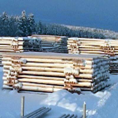 Lumisia pylväitä varastoituna taapeleihin talviaamuna.