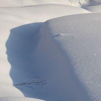 Aurinkoinen lumihanki Hämeessä talvella 2009-2010