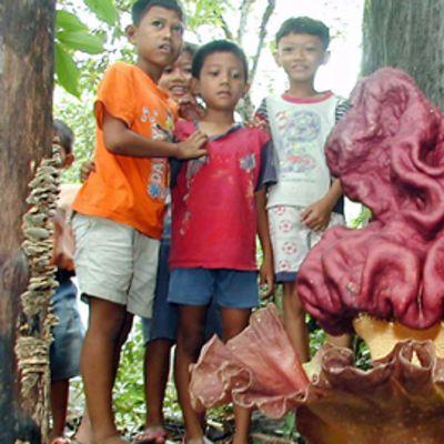 Neljä lasta katselevat verenpunaista kukkaak kallion sivustalla.