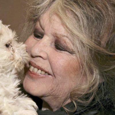 Brigitte Bardot pitelee käsissään koiranpentua, joka löydettiin Romaniasta lähteneestä rekasta 150 muun koiranpennun kanssa.