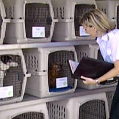 Lentoyhtiön työntekijä tarkastaa koiran kuljetussäiliön.