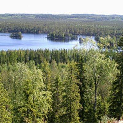 Metsämaisemaa järvineen