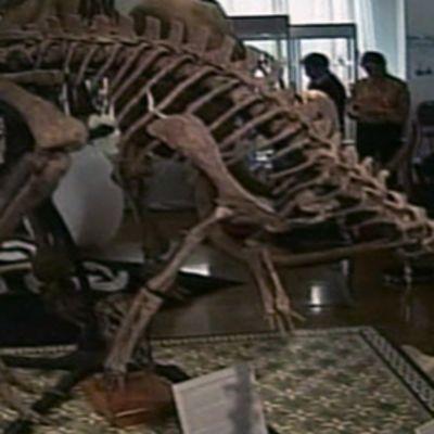 Huutokaupattavana oleva dryosaurus.