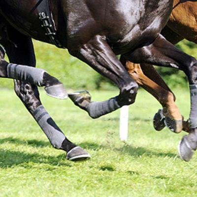 Hevosten jalkoja.