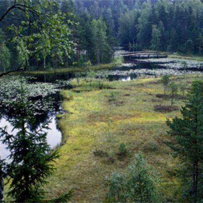 Lampi, suo ja metsää Nuuksion kansallispuistossa.