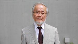 Nobelpriset i medicin till Yoshinori Ohsumi