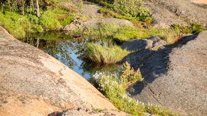 Kasveja Rankin saaren kallioilla