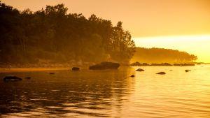 Vy från naturreservatet Muraste i Estland.