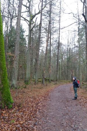 Trädforskaren Ewa Zin i strikta reservatet