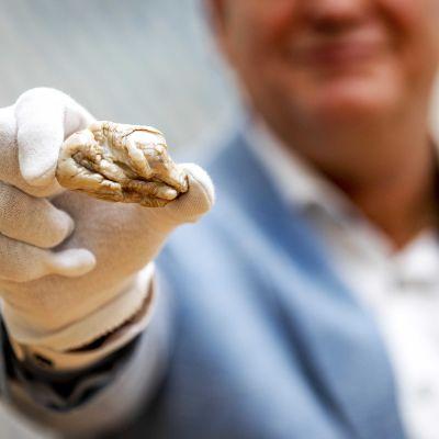 Världen största sötvattenpärla, som har fått smeknamnet Sleeping Lion, auktionerades ut för 320 000 euro år 2018.