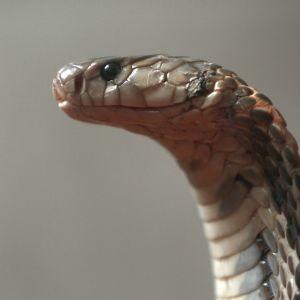 En kobra.