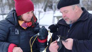 Minna Pyykkö haastattelee koskikaran rengastajaa Jyrki Tolvasta.
