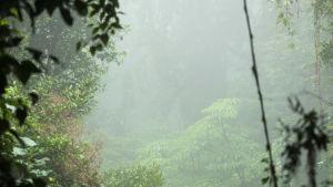 Monteverde cloud forest reserve i Costa Rica.