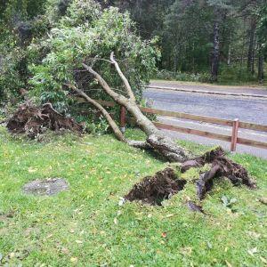 Omkullblåst träd i Brändö i Vasa.